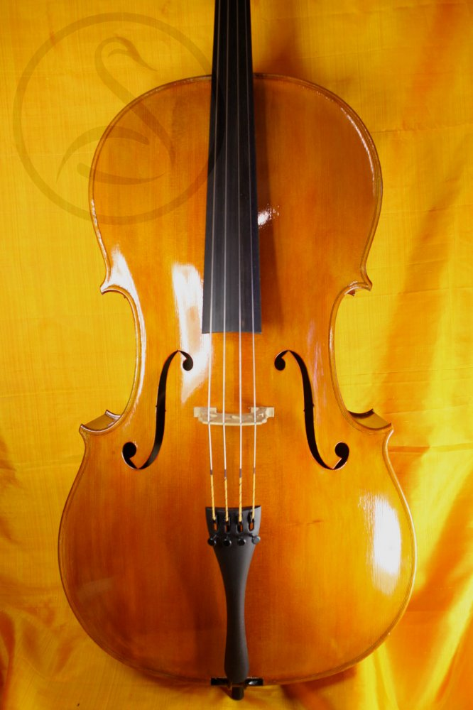MSV cello
